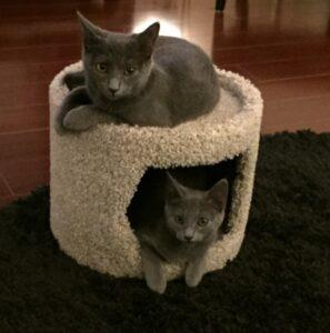 Anastasia & Tatiana